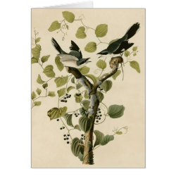 Note Card with Audubon's Loggerhead Shrike design