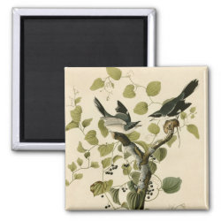 Square Magnet with Audubon's Loggerhead Shrike design