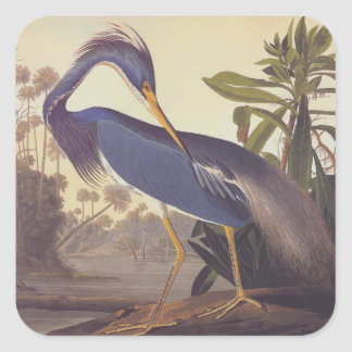 Audubon's Louisiana Heron or Tricolored Heron Square Sticker