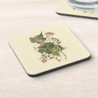 Audubon's Magnolia Warbler Beverage Coaster
