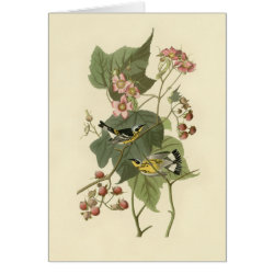 Note Card with Audubon's Magnolia Warbler design