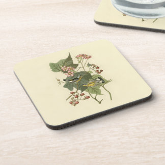 Audubon's Magnolia Warbler Coaster