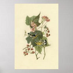 Matte Poster with Audubon's Magnolia Warbler design