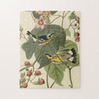 Audubon's Magnolia Warbler Puzzle