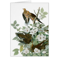 Note Card with Audubon's Mourning Dove design