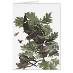 Note Card with Audubon's Night Hawk design