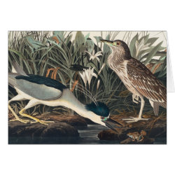 Note Card with Audubon's Night Heron design