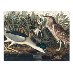Postcard with Audubon's Night Heron design