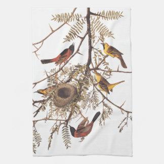 Audubon's Orchard Oriole Birds Nesting in Tree Towel