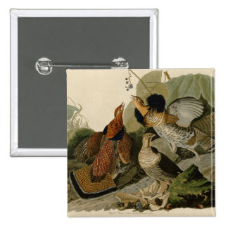 Audubon's Painting of a trio of Ruffed Grouse Pinback Button