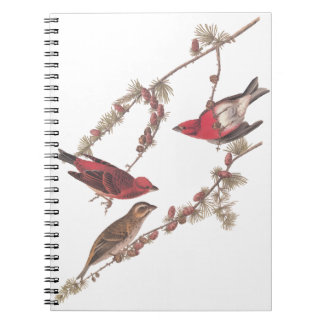 Audubon's Purple Finch Red Birds on Conifer Tree Notebook