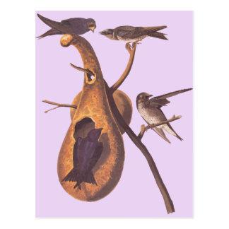 Audubon's Purple Martin Postcard