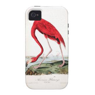 Audubon's Red Flamingo iPhone 4 Cases