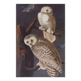 Audubon's Snowy White Owls at Night Vintage Art Poster