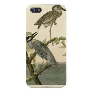 Audubon's Vintage Yellow crowned night heron paint iPhone 5 Cases