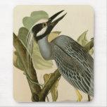 Audubon's Vintage Yellow crowned night heron paint Mouse Pad
