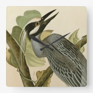 Audubon's Vintage Yellow crowned night heron paint Square Wall Clock