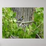 Audubon's Warbler Bird Photography Poster