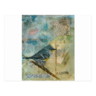 Audubon's Warbler Postcard