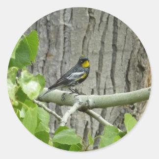 Audubon's Warbler Sticker
