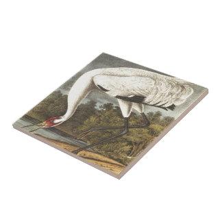 Audubon's Whooping Crane Tile