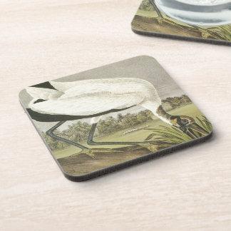 Audubons' Wood Stork Coasters