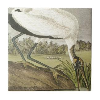 Audubons' Wood Stork Tile