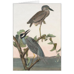 Note Card with Audubon's Yellow-crowned Night-heron design