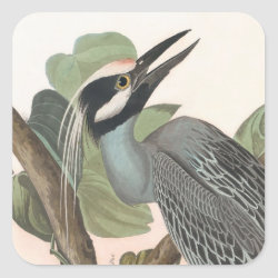 Square Sticker with Audubon's Yellow-crowned Night-heron design