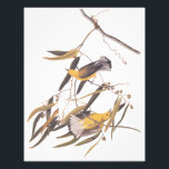 "Audubon&#39;s Yellow Prothonotary Warbler Vintage Art Photo Print<br><div class=""desc"">Photo print with Audubon&#39;s Prothonotary Warbler bird pair perched on a vine. Vintage art reproduction of a John James Audubon original art print. Plate three of Audubon&#39;s &quot;Birds of America&quot; series. This migratory song bird lives and breeds in the eastern United States and travels to Central America during the colder...</div>"