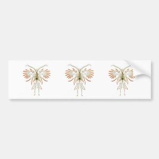 Augaptilus filigerus bumper sticker