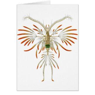 Augaptilus filigerus card
