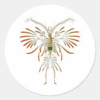 Augaptilus filigerus classic round sticker