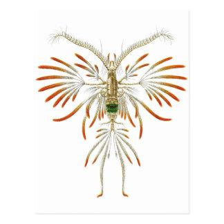 Augaptilus filigerus postcard