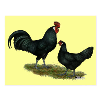 Augsburger Chickens Postcard