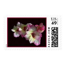 August Gladiolas Stamp