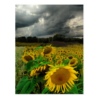 August storm , postcard