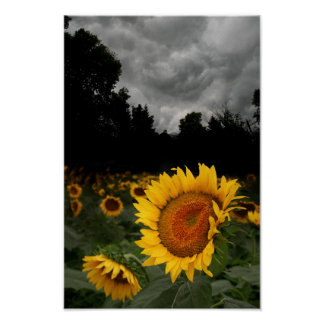 August storm posters
