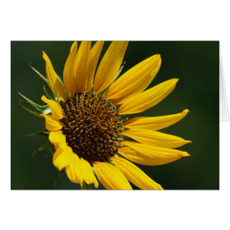 August Sunflower Card 5X7