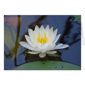 August Waterlily Card