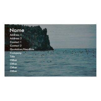 Auklet Business Card