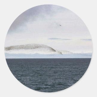 Auklet cloud, Kasatochi Island Classic Round Sticker