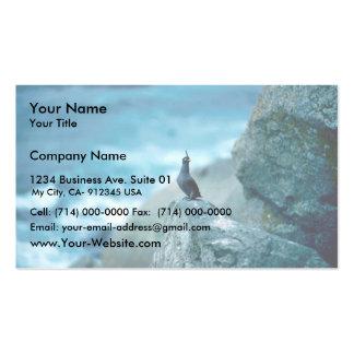 Auklet con cresta tarjetas de visita
