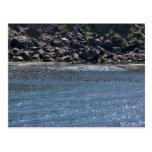 Auklet flock, Kasatochi Island Postcard