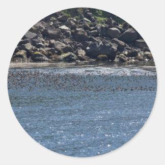Auklet flock, Kasatochi Island Classic Round Sticker