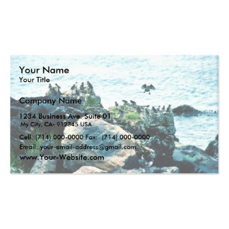 Auklets Business Card
