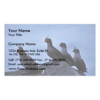 Auklets con cresta plantillas de tarjetas de visita