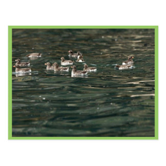 Auklets del Parakeet Castle Rock islas de Shumag Postal