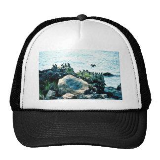 Auklets Trucker Hat
