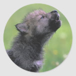 Aullidos del lobo del bebé etiqueta redonda